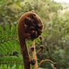 Los que vivimos en Europa nos sorprende plantas como esta, muy habituales de los bosques trópicales de la isla reunión.